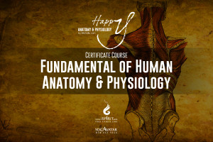 A Fundamental Human A&P