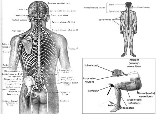 Neurovibe Yoga Graphic
