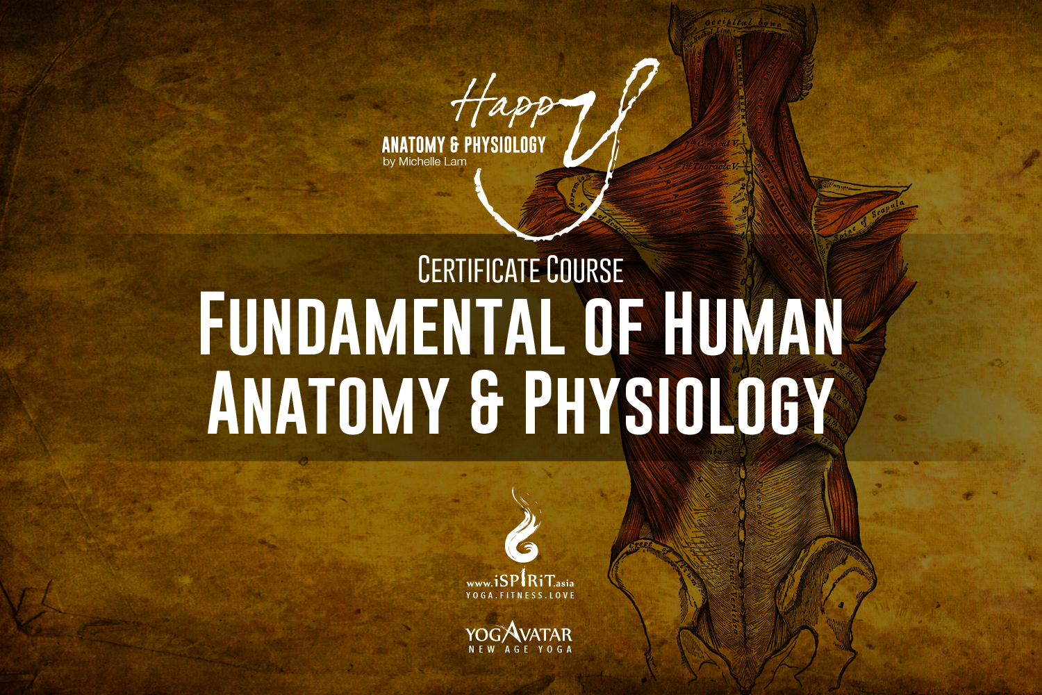 Happy Anatomy & Physiology Certificate Courses by Michelle Lam