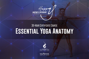 A essential yoga anatomy